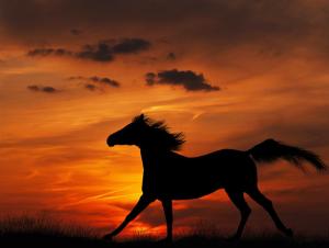 HorseBucking