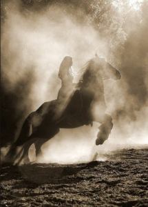 HorseGodiva1