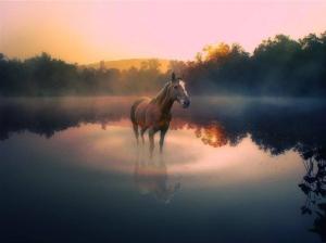 Horse at Dawn