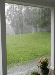 Summer rain19