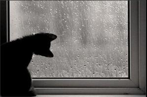 Summer rain21