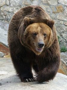 Bear Yo1